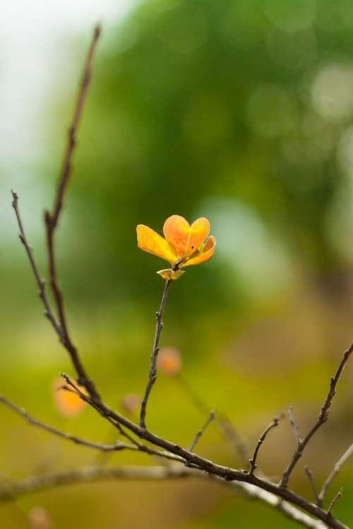 Spring Living Foods Flowers Branch