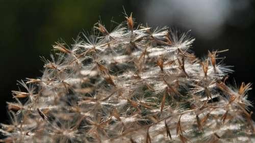 Spring Reed Dry Backlight Macro