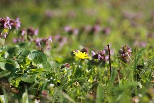 Spring Flower Sunshine Spring Flowers Flowers