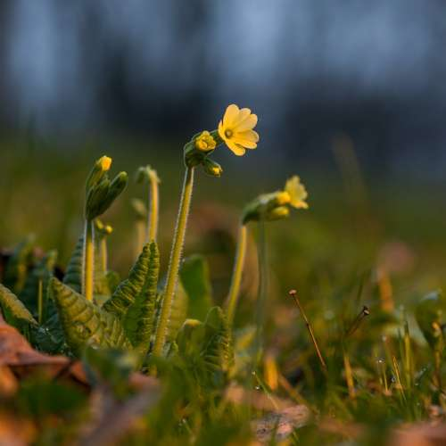 Spring Flowers Leaves Sun Nature Macro Detail