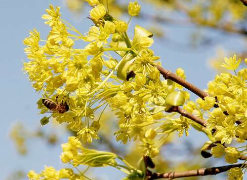 Spring Nature Blossom Bloom Flowers Bee Yellow