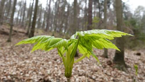 Spring Plant Scion Landscape Growth Plug