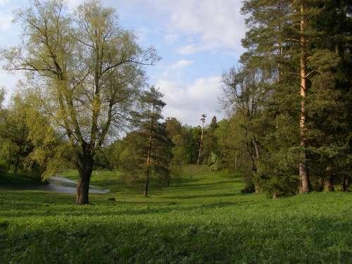 Spring Tree Green Lane Bridge River Sky