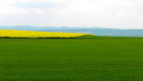 Spring Field Spring Oilseed Rape Rape Blossom