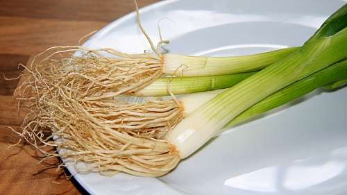 Spring Onion Leek Onions Food Eat Edible Plate