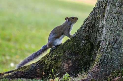 Squirrel Tree Animals Wildlife Nature Bark Stem