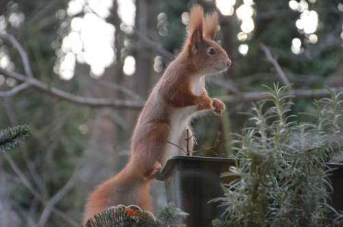 Squirrel Animals Nature Nager Fur Cute