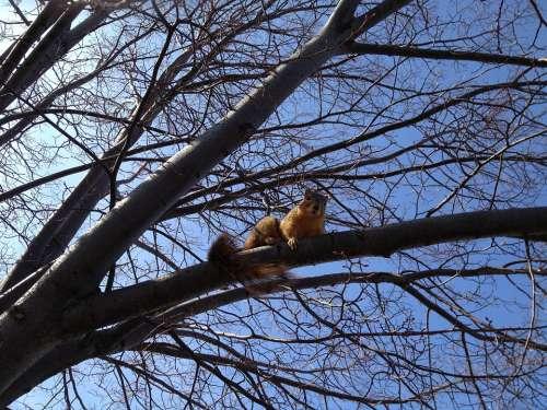 Squirrel Animal Climb Tree Branch