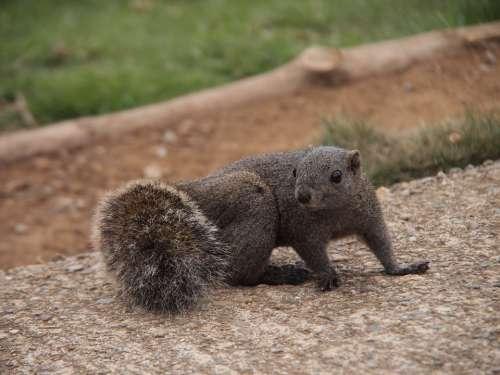 Squirrel Azole Animal Mammals Cute