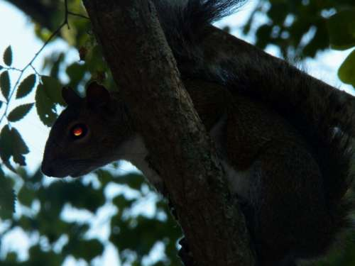 Squirrel Creepy Wildlife Animals Critter Park