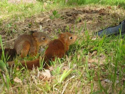 Squirrel Children Garden Shoe Grass Summer Colors