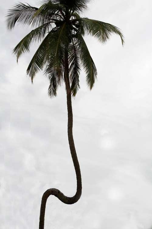 Sri Lanka Nature Sea Coconut Palm Coconuts