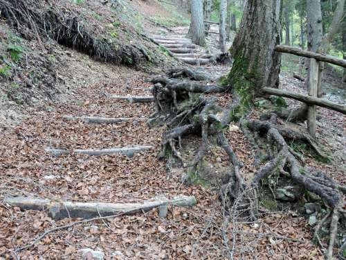 Staircase Forest Roots Wood Steps Autumn Leaves