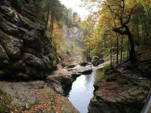 Starzlachklamm Allgäu Sonthofen Bach Forest