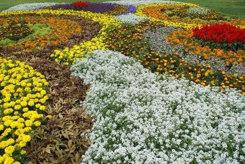 State Garden Show Flowers