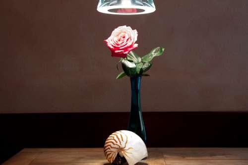 Still Life Vase Nautilus Table Rose Pendant Lamp