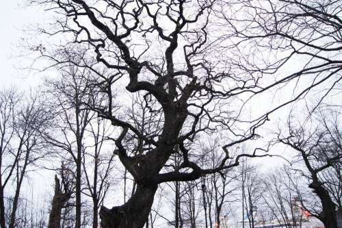 Stockholm Winter Tree Sweden Scary Twisted