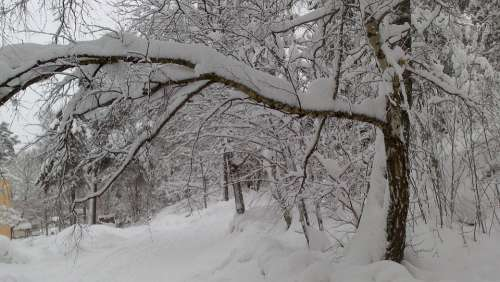 Stockholm Winter Snow Winter Dream Wintry Snowy
