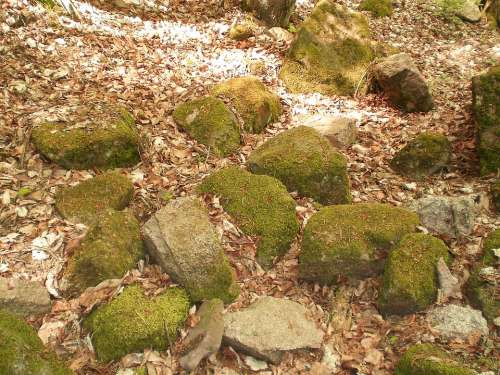 Stones Nature Moss Weathered Forest Floor