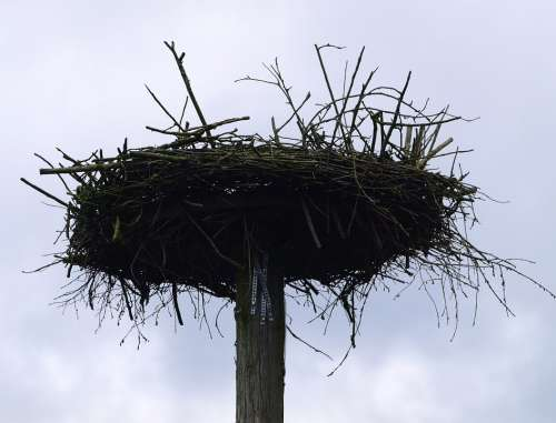 Storchennest Bird Nest Pile