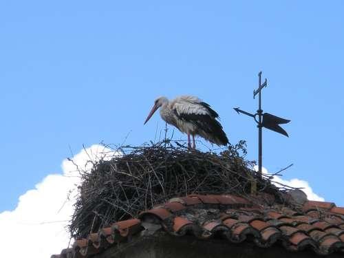 Stork White Stork Birds