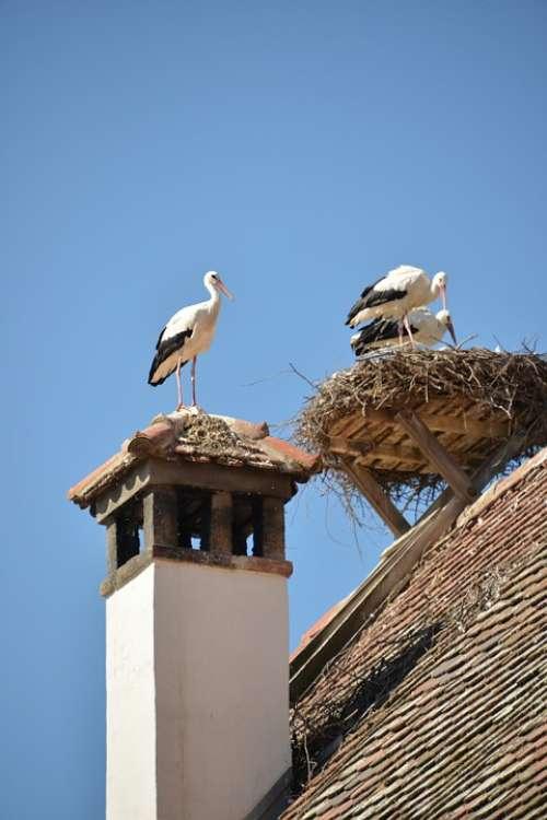 Stork Bird Animal Rattle Stork White Stork Roof