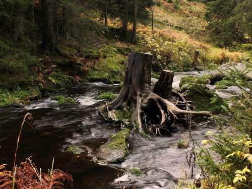 Strain Water Stump