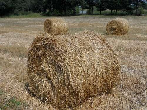 Straw Field Landscape Bale Harvest Corn Grains