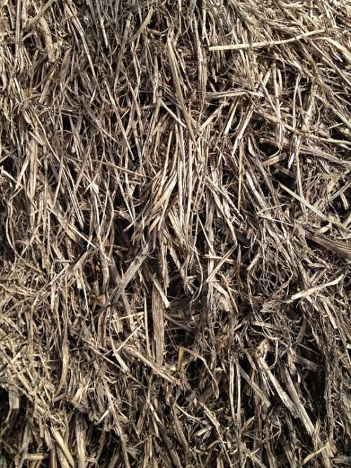 Straw Grain Grass