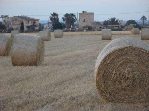 Straw Bales Hay Bales Field Abendstimmung Mowed