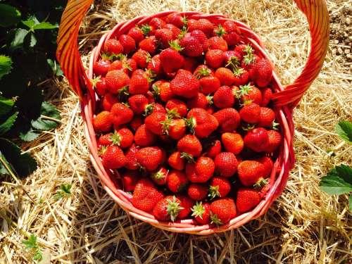 Strawberries Red Fruits Basket Eat Jam Cook