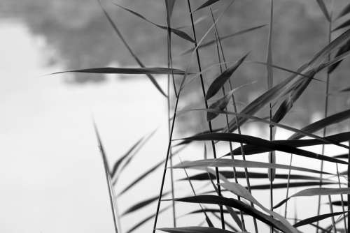 Straws Water Landscape Blade Of Grass Nature