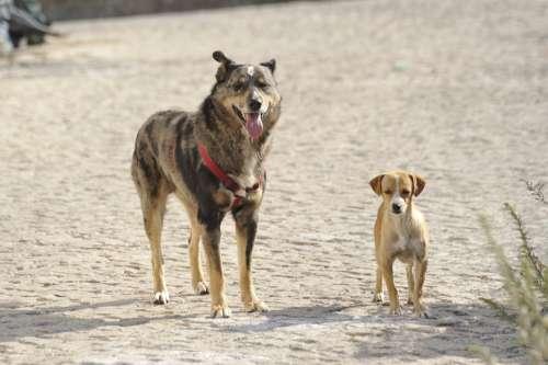 Strays Dogs Size Comparison Dog Breed Bastard