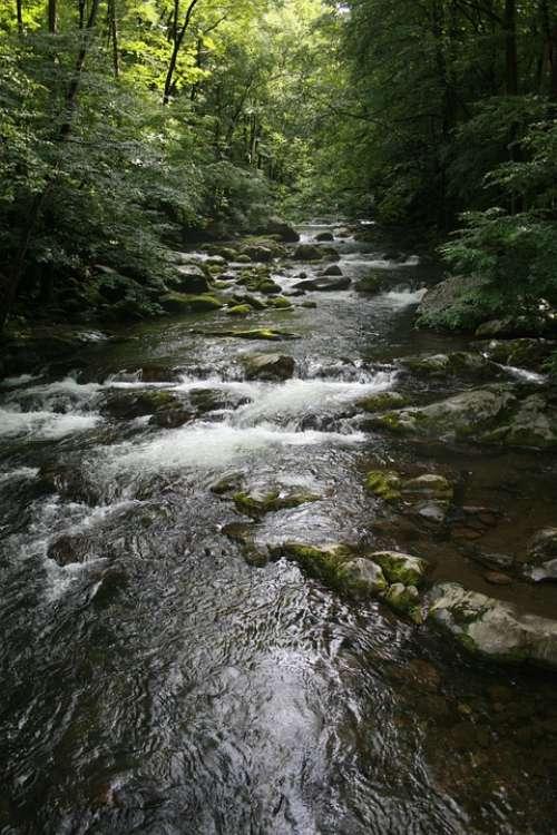 Stream Forest Nature Water Green Creek Beautiful