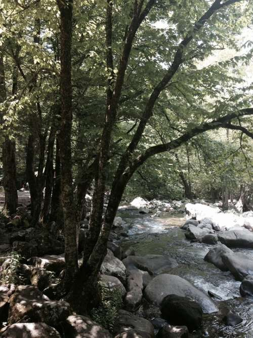Stream Tree Water Rock Nature Forest Landscape