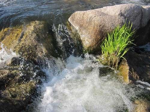 Strudel Bach Water Schlücht Gurtweil Black Forest