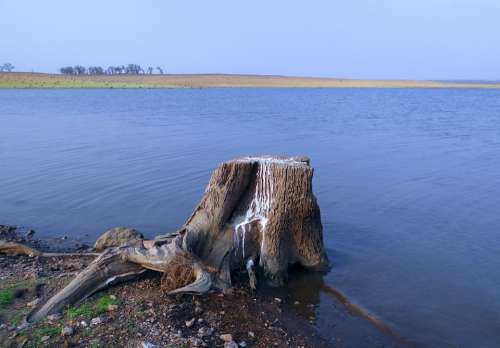 Stub Tree Stump Bird Perch Guano Bird Excrement