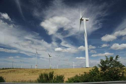 Summer Wind Farm Meadow