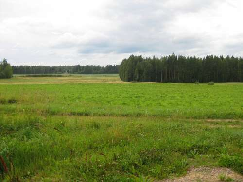 Summer Landscape Forest Field Sky Green Finnish