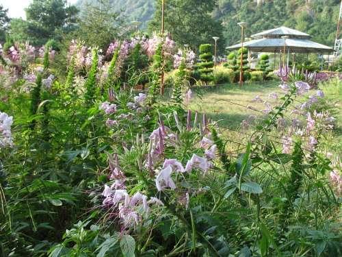Summer Garden Flowers Nature Green