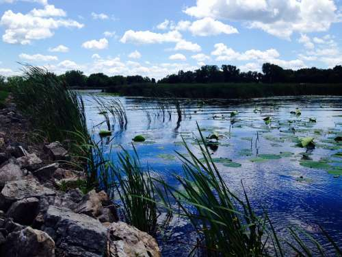 Summer Lake Water Environment Tranquil Scenery