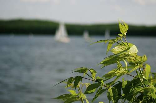 Summer Sail Water Blue Lake Pond Sport Green