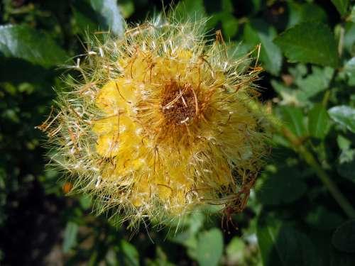 Summer Flower Yellow Flower Blossom Bloom