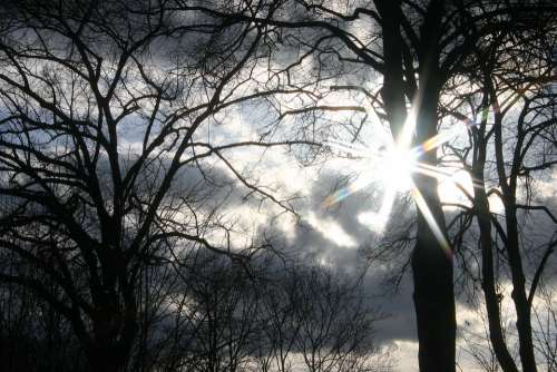 Sun Forest Tree Trees Backlighting Sky Sunset