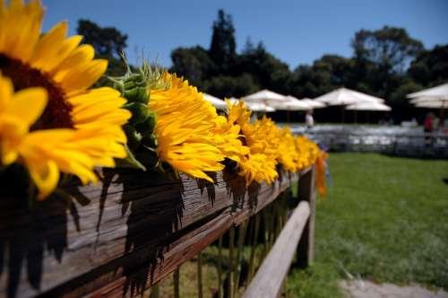 Sunflowers Fence Flower Pot Flowerpot Potted Plant