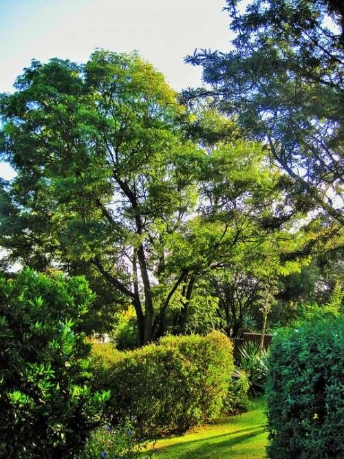 Sunny Garden Garden Green Trees Shrubs Lawn Sun