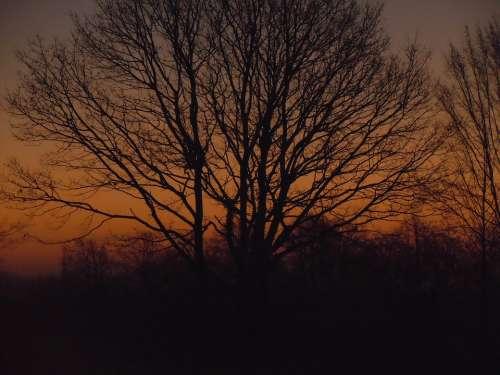 Sunrise Tree Orange