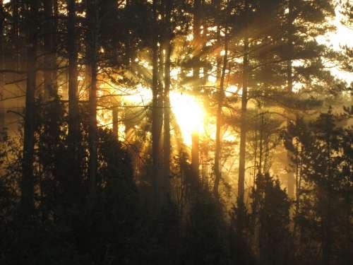 Sunrise Morning Landscape Forest Autumn Nature