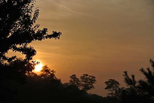 Sunrise Morning Wood