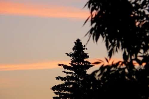Sunrise Dawn Sky Clouds Tree Spruce Contrast